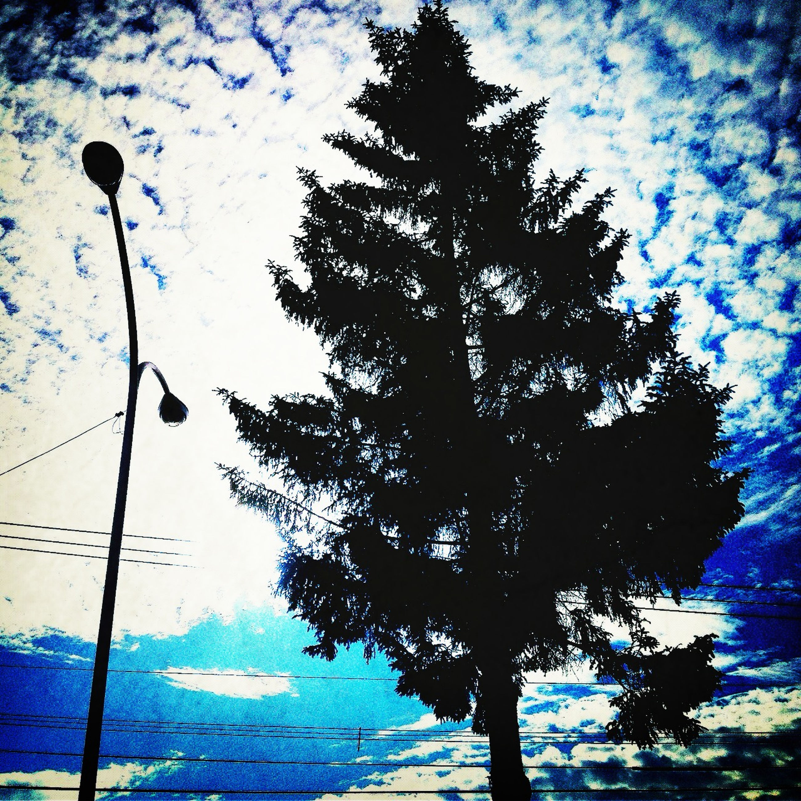 low angle view, sky, tree, blue, power line, silhouette, nature, cloud - sky, tranquility, beauty in nature, electricity, cloud, scenics, electricity pylon, cable, power supply, growth, tranquil scene, branch, outdoors