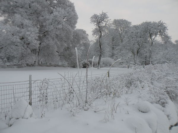 Tree Winter Snow Cold Temperature Plant No People Nature Day Outdoors Sky Beauty In Nature Landscape Tranquility Danmark Danish - in the Countryside of the island of Zealand in Denmark