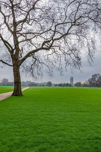 Hyde park tree