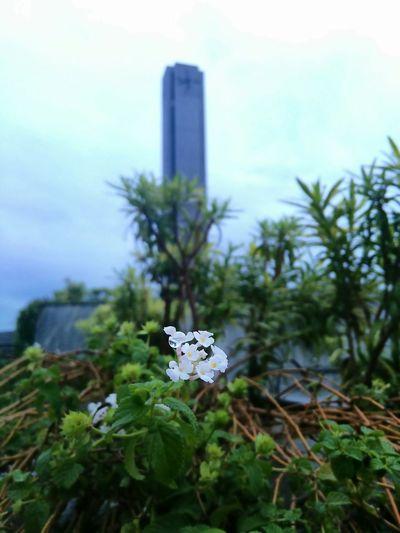 Clock Tower Macro EyeEm Nature Lover Nature White Flowers White Flower Raindrops Ssn EyeEm Best Shots My Best Photo 2015
