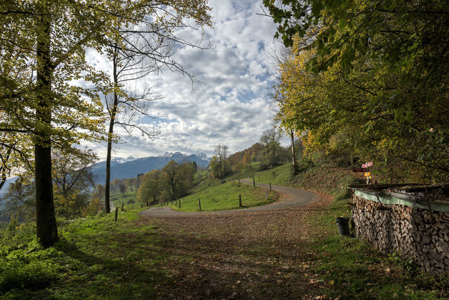 Rheintaler Höhenweg Beauty In Nature Day Forest Grass Growth Landscape Mountain Nature No People Outdoors Road Scenics Sky Tree