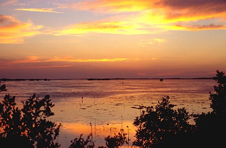 Shallow Water Mangrove Lagoon Caribbean Sea Sunset Scenics Beauty In Nature Sea Water Nature Sky Tranquil Scene Tranquility Silhouette Reflection Cloud - Sky Orange Color Beach Horizon Over Water Idyllic Sun No People Outdoors Travel Destinations