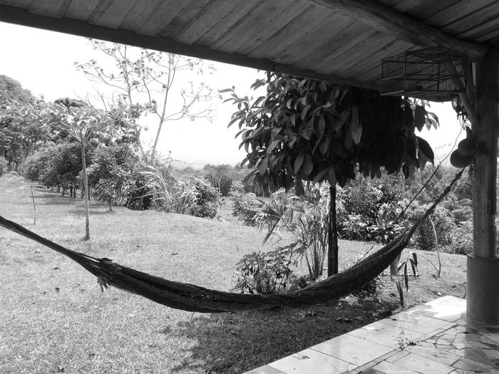 Tree Hanging Day Growth Wood - Material Hammock Outdoors Nature Built Structure No People Sky