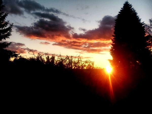 Sunset in Bärenklau Evening Sun Lovely Friends