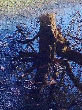 December Reflected Tree Learn & Shoot: Balancing Elements Eyeemphotography Eye4photography  Taking Photos Twenty20 EyeEm Best Shots Nature Nature_collection Nature On Your Doorstep Winter EyeEm Nature Lover EyeEm Best Shots - Nature Seasonal Popular Photos Smart Simplicity