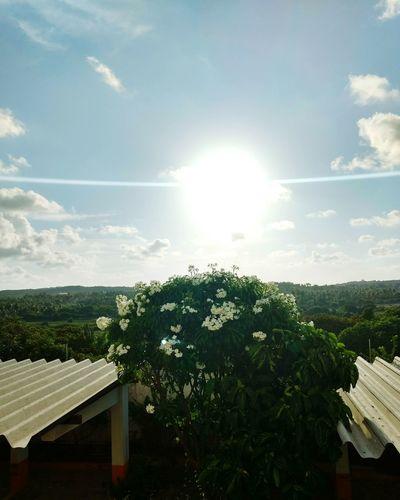 Sunset Forest Sun Sunlight Cloud - Sky Day Sky Outdoors No People Sunlight Tree