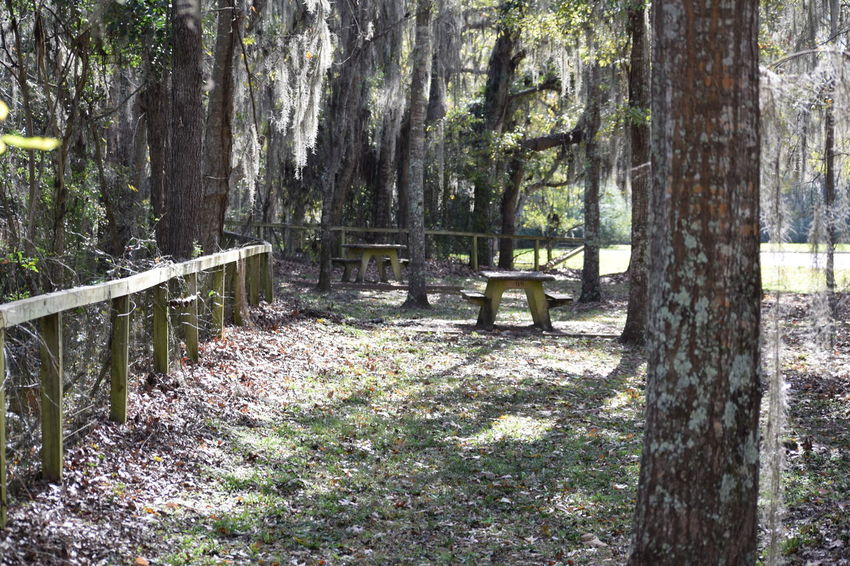 Beauty In Nature Forest Nature Non-urban Scene Tranquility Tree Wood - Material WoodLand Alabama Park Picknick Lowndes County Alabama Alabama Outdoors
