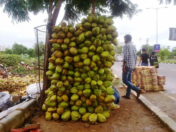 coconuts Hyderabad Coconut Streetphotography Street Food Indiapictures Indian Streetfood Indian Culture  South India Hyderabad Green Food Stories Fruit Food And Drink Food Healthy Eating Abundance Freshness Tree Outdoors Healthy Lifestyle EyeEmNewHere