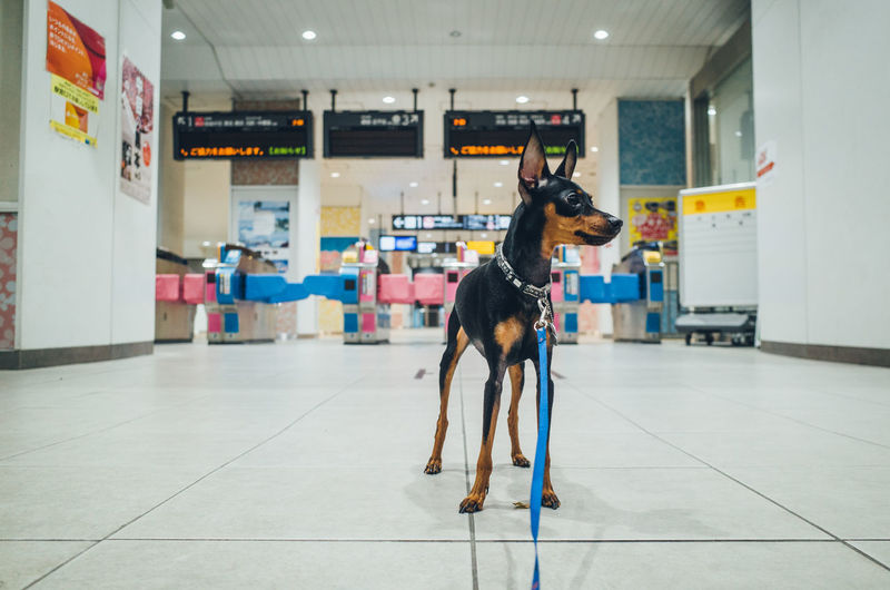 Dog Standing On Floor At Subway Station