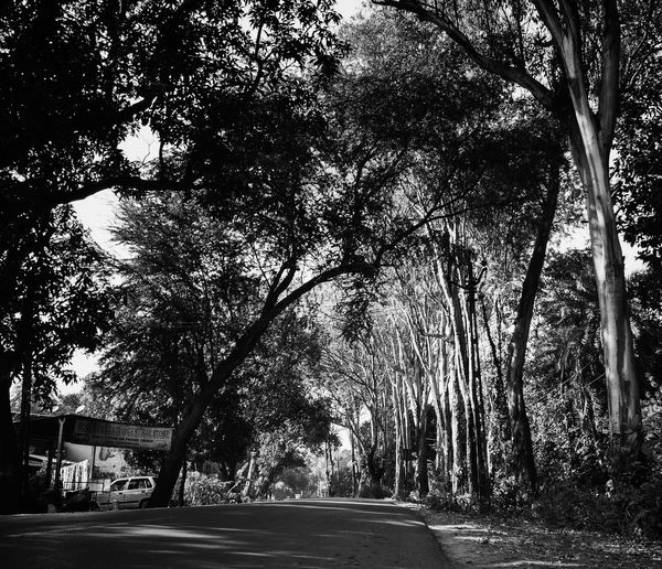 Only Trees Many Of A Kind Eye4photography  Dark Shadows & Lights Black And White Light EyeEm Nature Lover The Way Forward Tree Day Outdoors Road No People Nature Sky Beauty In Nature