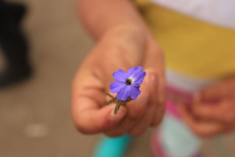 Ripped off Day Dying Flowers Flower Fragility Hand Nature Nature Petal Purple