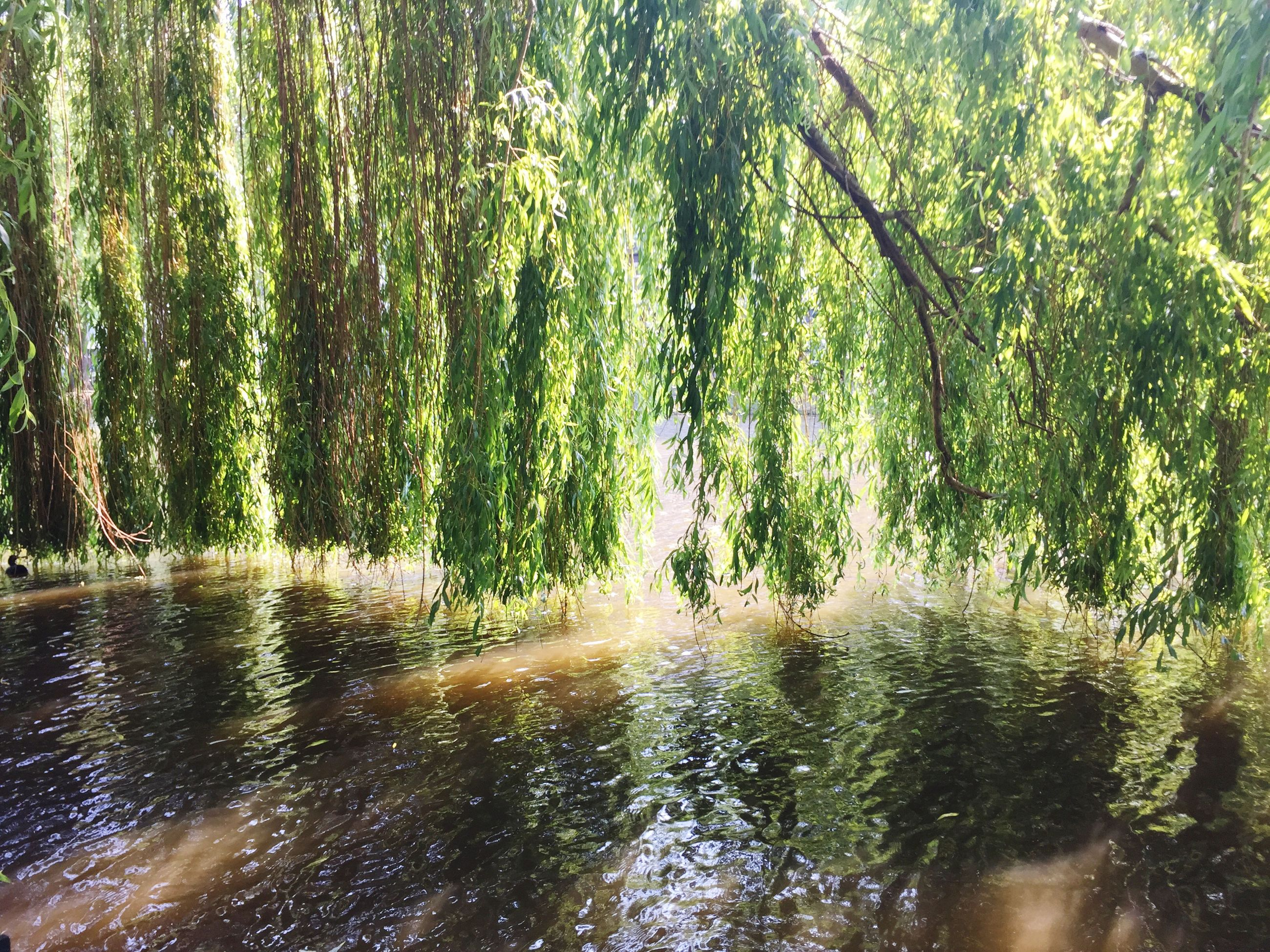 water, tree, waterfront, reflection, tranquility, nature, tranquil scene, beauty in nature, lake, growth, scenics, forest, green color, rippled, river, branch, idyllic, day, sunlight, outdoors