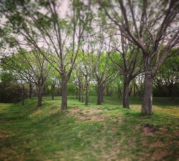 En la Arboleda . Into the Grove . Trees Willow Weepingwillow Forest Woods Riverside Coast Green Nature Oxigen O2 Instagood Instadaily Lunch Blurry Walking Silence Quiet Peaceandlove Coast