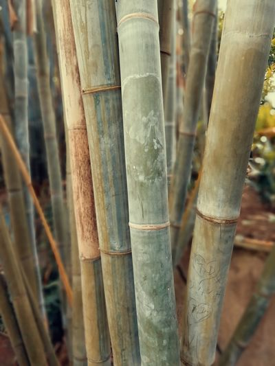 Bamboo Jungle Green Color Growing Tropical Climate Trunks Rain Forest Plant Part Bamboo - Plant Tree Trunk Forest Bamboo Grove Environmental Issues Close-up Bamboo Lumber Industry Timber Forestry Industry
