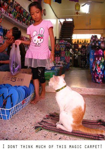 Flying Carpet Cat Shop Girl Thailand Tourist Shop