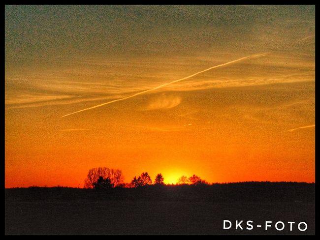 Sweden The True Story Sunset Tree Communication Text Sky