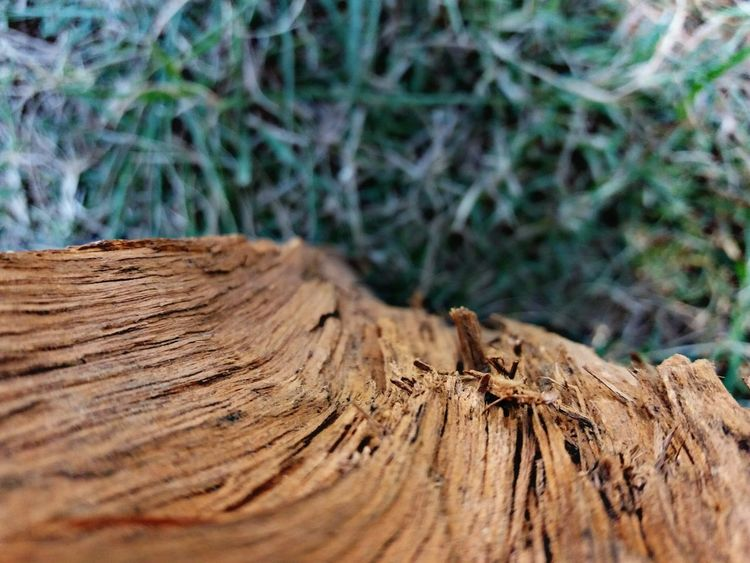 barkless Tree Tree Ring Tree Stump Backgrounds Wood - Material Brown Close-up Log Firewood Environmental Damage Fallen Tree Dead Tree Lumber Industry Timber Woodpile Deforestation