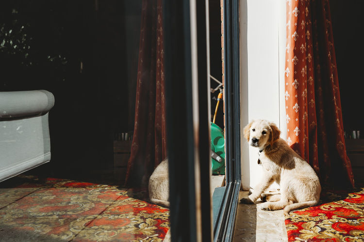View of dog sitting by window at home