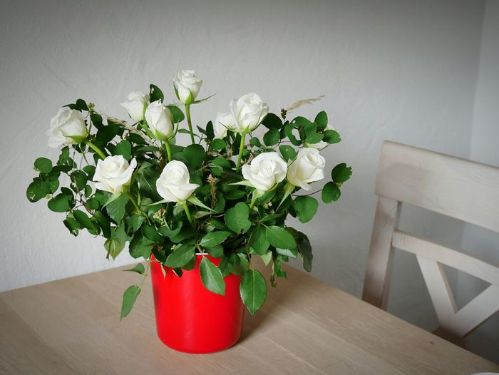 Close-up of potted plant on table against white wall