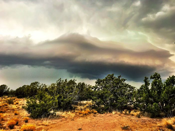 """The Presence"" An ominous cloud formation ushers in a major thunderstorm over the highlands of Central New Mexico. New Mexico Photography New Mexico Skies New Mexico Clouds Stormy Weather Storm Cloud Cloud - Sky Sky Tree Scenics - Nature Dramatic Sky Storm Ominous Landscape"