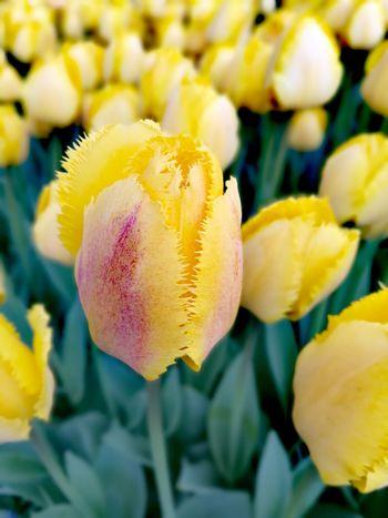 Flower Nature Yellow Beauty In Nature Nature P9leica Konya Turkey Turkeystagram City
