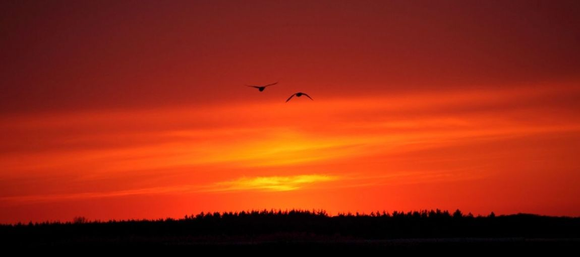 Die Menschen die das Leben nicht so ernst nehmen, haben bessere Chancen glücklich zu sein . . . . . . . . . . . . . . The people who do not take life so seriously, have better chances to be happy Birds In Flight My Picture 2018 Have A Nice Day♥ Sunrise_sunsets_aroundworld GERMANY🇩🇪DEUTSCHERLAND@ Eyeem Photography Eyeem Sunset-sunrise Malephotographerofthemonth Daylight Beautiful Nature Sunnyday☀️ Alone But Not Lonely EyeEm Germany Panoramic View On The Road Bird Bird Of Prey Flying Sunset Flamingo Tree Silhouette Sky Romantic Sky Moody Sky Scenics Idyllic Sky Only Atmospheric Mood