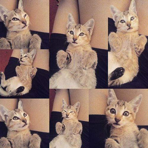 My baby kitty❤❤❤😻😽😳😇 @bestcatofheworld Uglyface Bestcats_oftheworld