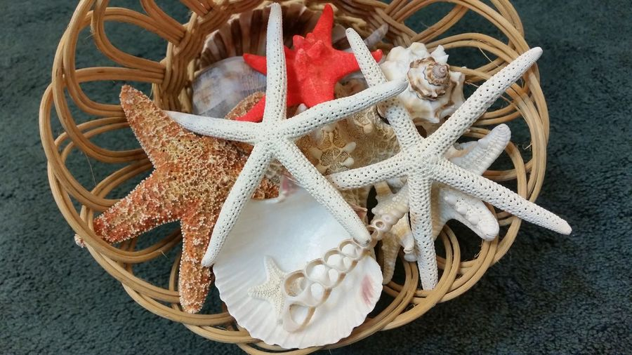 Sea Shells Fresh Missouri Ozarks United States EyeEm Selects High Angle View No People Day Beach Outdoors Close-up Sea Life Starfish  Food Food And Drink Indoors  Freshness