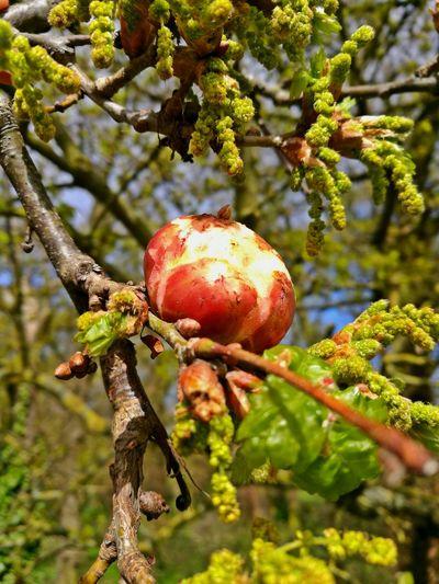 Spring Bud Tree Beautu Nature