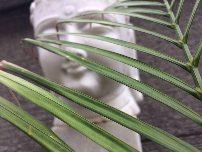 Calm and quiet.... Green Color Close-up Growth Leaf Plant No People Nature Day Outdoors Grass Beauty In Nature Freshness Buddha Marble