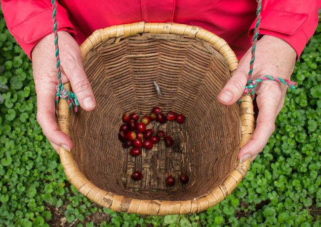 #coffee #coffeeplantation #coffeesnob #coffeeup #ecuador #ecuadoriancoffee #greenbeans #riointag Peaberry Coffeesnob Coffeebean Coffee Cotacachi Riointag Ecuador