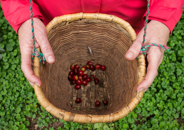 Midsection of woman holding basket with fruits