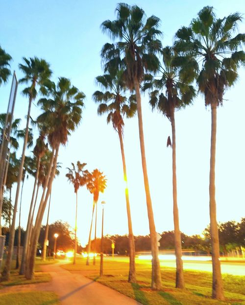 Palm Tree Sunset Sunset_madness Sunsetporn Sunset_collection Sunset Lovers Sunsetlovers Sunset Silhouettes Dramatic Sky Sunsets Palm Tree Silhouette Sunset Palm Lighttrails Lighttrail Light Trails