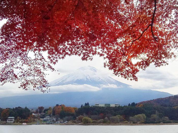 Fuji Autum