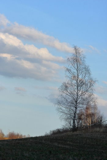 Bare Tree Beauty In Nature Cloud - Sky Day Environment Field Grass Horizon Over Land Isolated Land Landscape Nature No People Non-urban Scene Outdoors Plant Scenics - Nature Sky Tranquil Scene Tranquility Tree