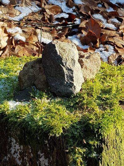 Stone Moos
