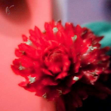 New Learn And Shoot: Simplicity New Beginning Macro_captures Trying Macro Smartphone Photography Blossom, Macro Flower Red Color At Home :)