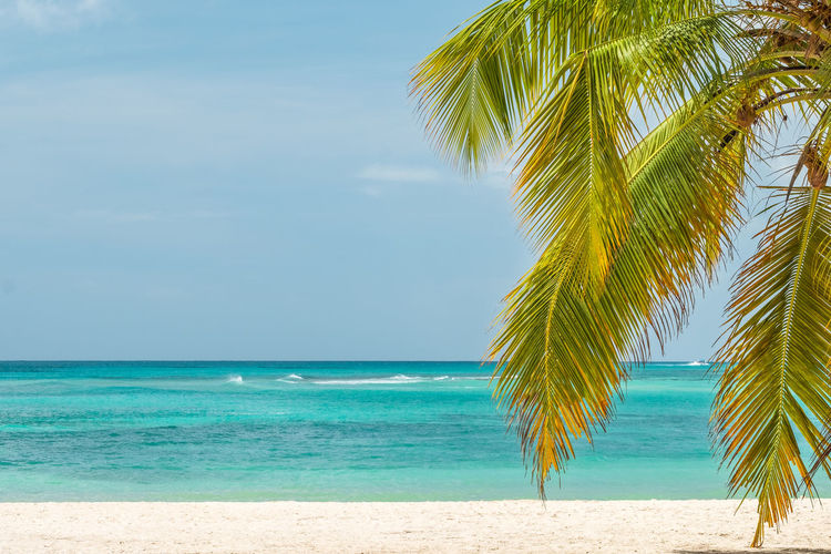 Sea Water Tropical Climate Sky Scenics - Nature Beach Tree Beauty In Nature Horizon Over Water Palm Tree Horizon Tranquility Nature Plant Idyllic No People Blue Turquoise Colored Outdoors Palm Leaf Coconut Palm Tree Copy Space Island Vacations Carribean