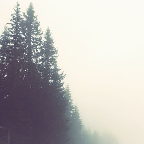 Forest foggy