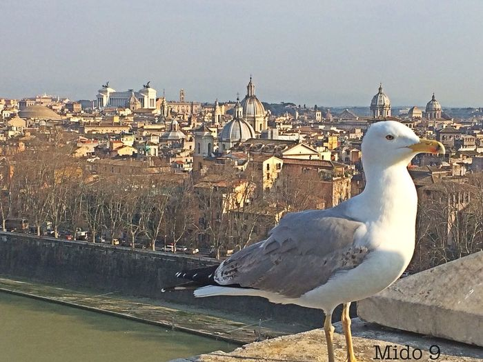Check This Out Vetta più alta castel sant'angelo Roma Hello World Taking Photos