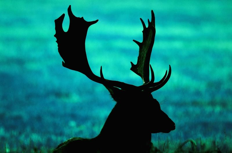 ♥♥ животные голубой красиво олень
