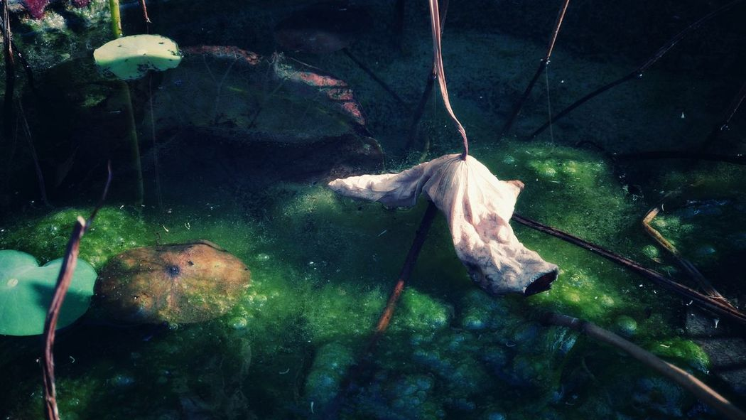 Water Hanging Close-up
