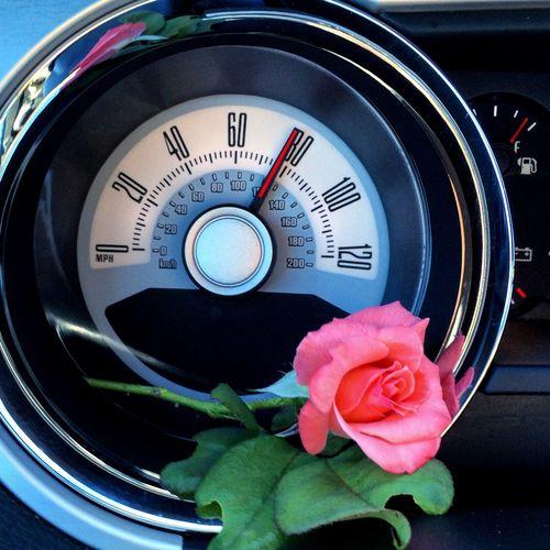 Powerful beauty EyeEmNewHere Mustang Rose - Flower Speed Speedometer