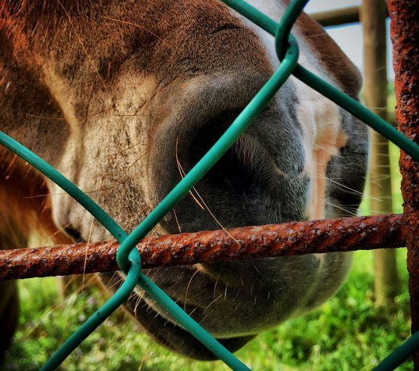Just Nose Horse Horse Nose Animal Close Up IPhoneography Iphoneonly IPS2016Closeup