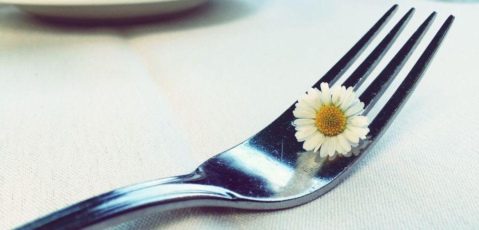 Daisy Daisy Flower Daisy 🌼 Daisy💜 Daisy ♥ Daisys Daisyflower Margerite Margeriten Flower Power One Flower Blume🌸 Blume Marguerite Flower Marguerite Marguerites Iphonephotography Fork Gabel Fourchette Fleurs Flowers Fleur ♡