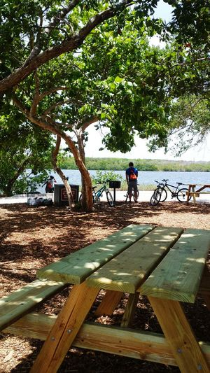 Bycicle Rider By The Sea Benchunderthetree Trees Feel The Journey 43 Golden Moments Adventure Feelthejourney Eyem People Eyem Nature Natural Light Portrait Eyeemphoto Color Palette People And Places