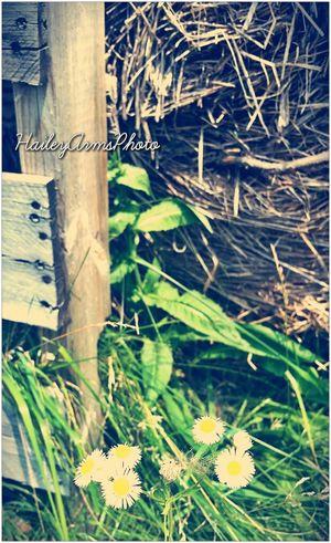 Nature EyeEm Best Shots Inspiration Summer