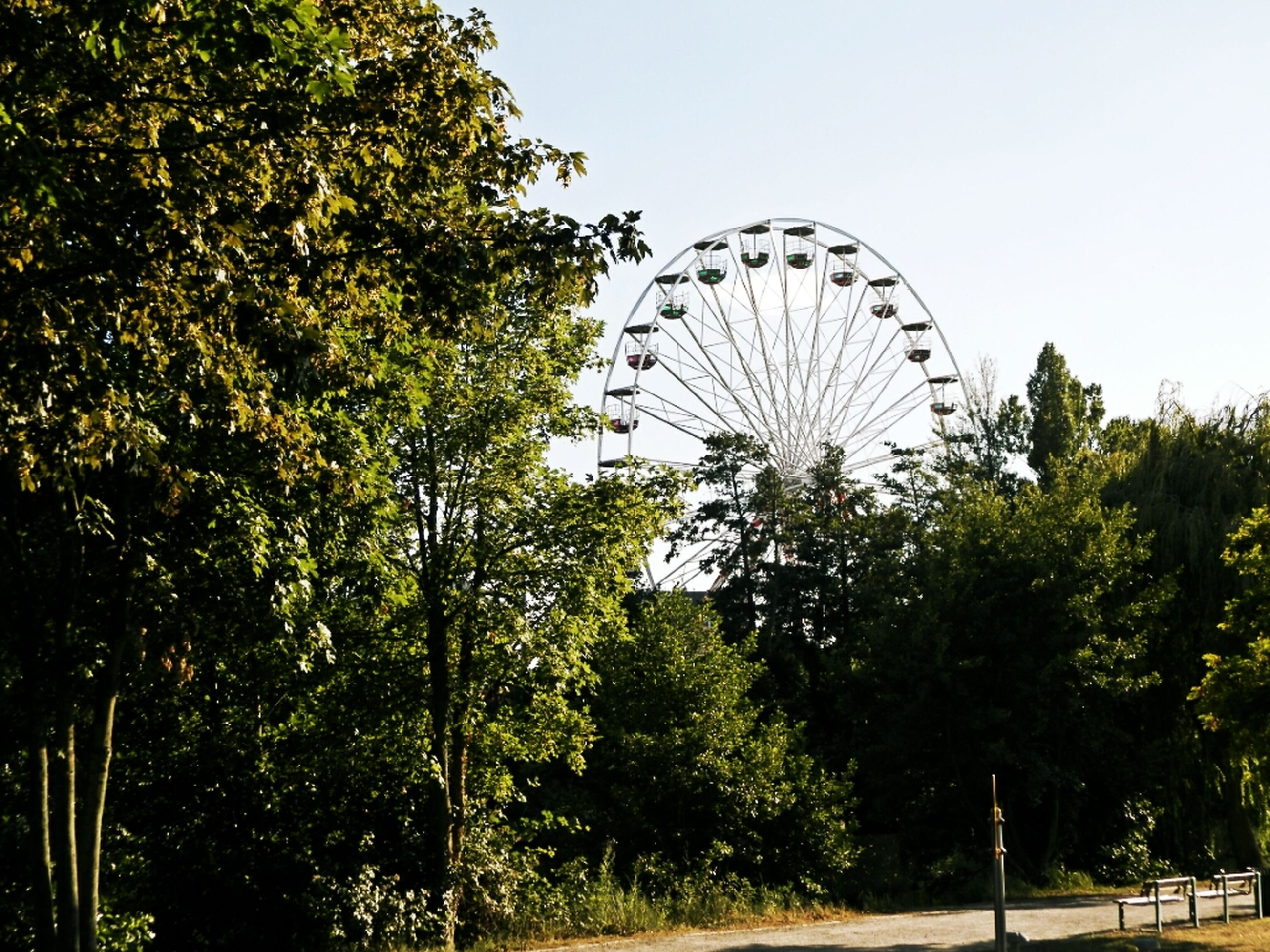 tree, ferris wheel, amusement park, amusement park ride, arts culture and entertainment, clear sky, low angle view, built structure, architecture, circle, sky, park - man made space, growth, large, outdoors, day, building exterior, no people, nature, incidental people