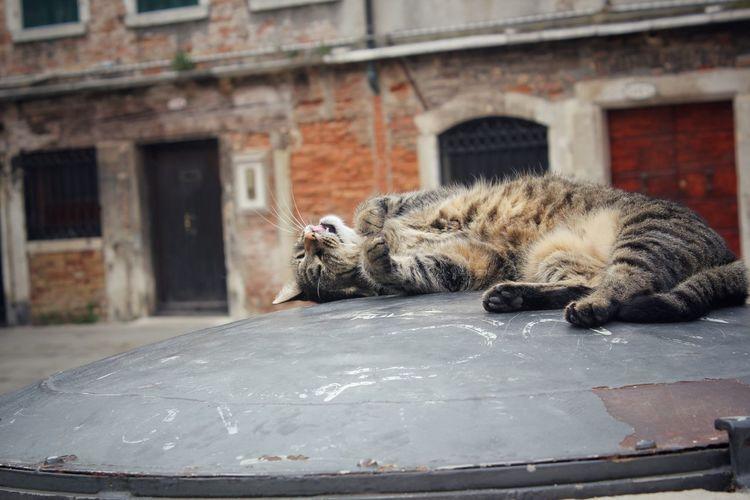 Cat sleeping on car roof