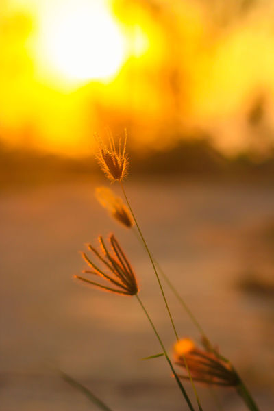 Beauty In Nature Cereal Plant Close-up Day EyeEm Nature Lover Field Focus On Foreground Growth Nature No People Outdoors Plant Scenics Sky Sunset Tranquil Scene Tranquility Water